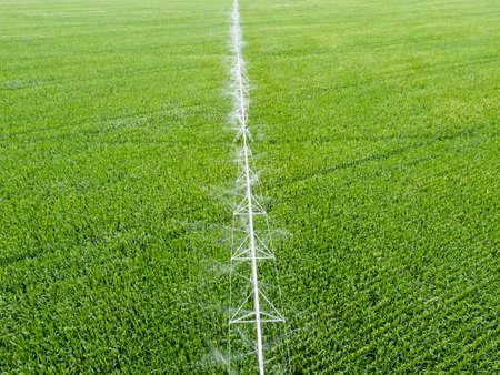 Irrigation system over corn field, top view 版權商用圖片