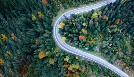 Top view, road through dense forest. Aerial view.