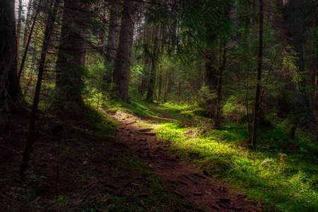 Bright light falls on a dark forest. Autumn landscape.