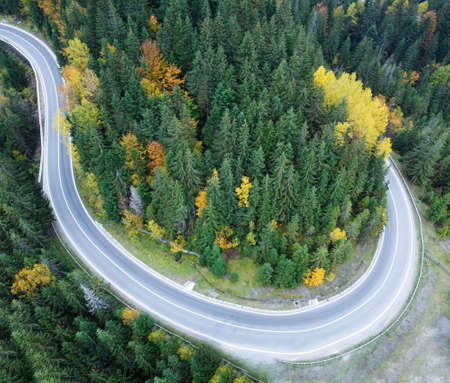 Paved road through a dense forest in the Carpathian mountains, Ukraine.