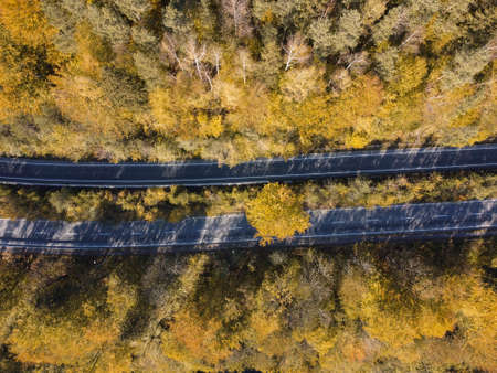 two roads through the autumn forest and yellow trees, top view