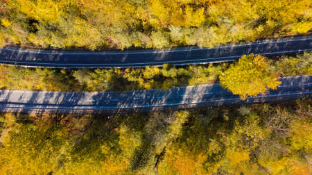 Two roads through the yellow autumn forest. Top view on trees with yellow leaves and asphalt road. 免版税图像