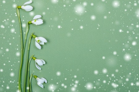 white  spring flowers on green background photo