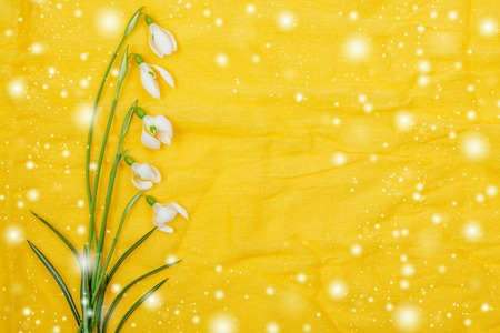 white  spring flowers on yellow background photo