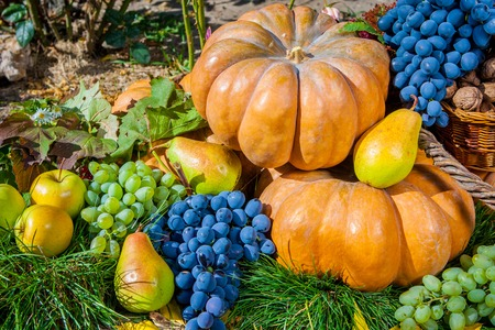 Autumn harvest. Pumpkin apples pears grapes outdoors in sunny autumn day. photo