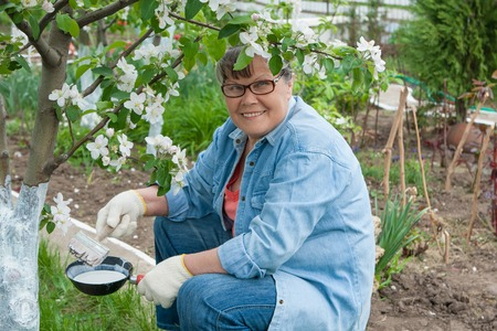 landlady: Woman working in her garden. Care tree after winter. tree from harmful insects.