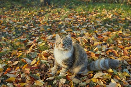 Cat in autumn sunny day, against the background of fallen leaves