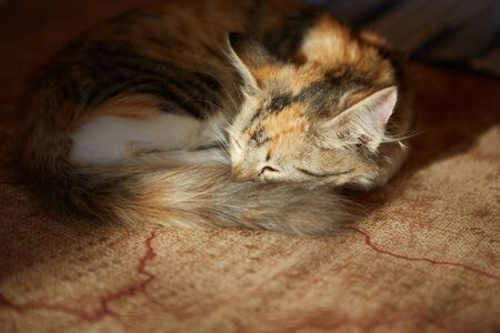 Lazy cat sleeps on sofa. Winter or autumn weekend concept.