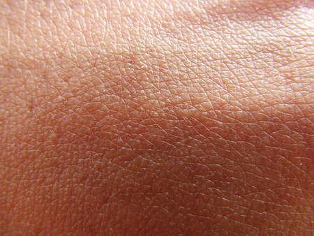 肌の質感 写真素材