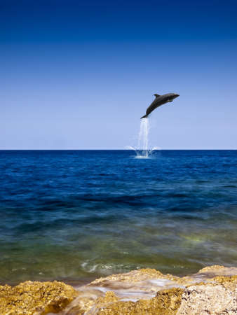 Dolphin jumping out of beautiful crystal clear ocean water