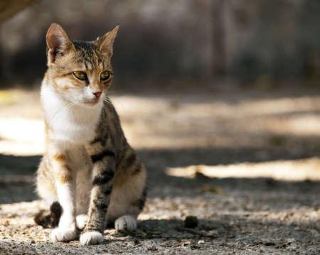 地中海の国々 で非常に一般的な記号であるマルタの路上でかわいい小さい迷い猫