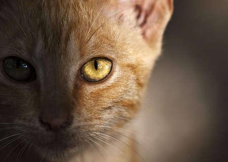 sidelit: Sidelit portrait of a cute little stray cat