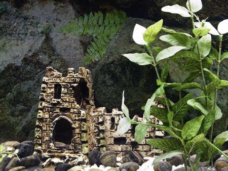 freshwater aquarium plants: Decorations in a freshwater aquarium Stock Photo
