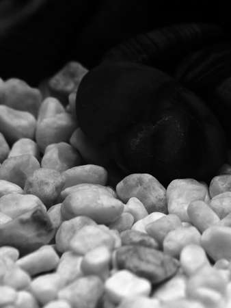 aquaria: Gravel and pebbles in freshwater aquarium