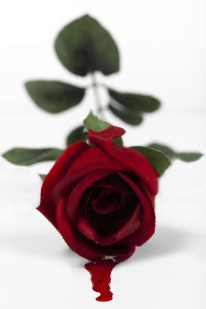 Conceptual image representing fake love, showing a fake rose with blood pouring out of it.