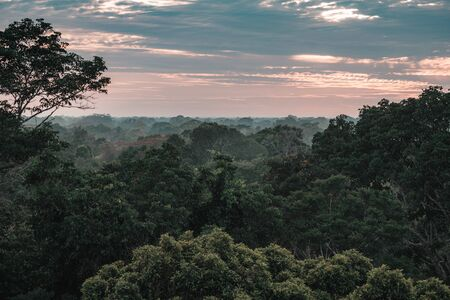 Amazon rainforest during a sunset with a beautiful sky