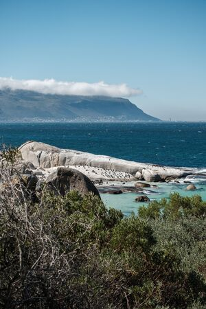 African penguins on Boulders beach and Table mountain