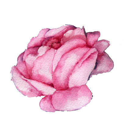 rose bud: watercolor sketch: a pink rose bud on white background Stock Photo
