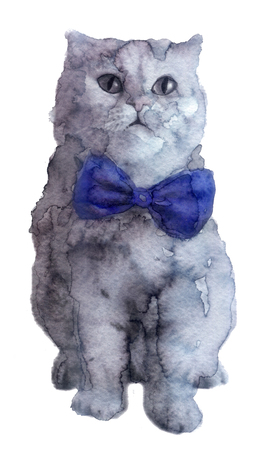 abyssinian: watercolor sketch: cat on a white background Stock Photo