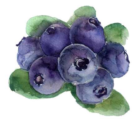 watercolor sketch of blueberries on a white background Фото со стока