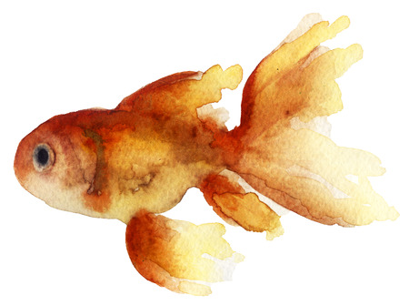 fishtank: Watercolor sketch of goldfish Stock Photo