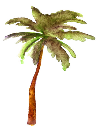 흰색 배경에 야자 나무의 수채화 스케치 스톡 콘텐츠
