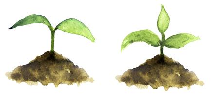 수채화 스케치 : 흰색 배경에 새싹 스톡 콘텐츠
