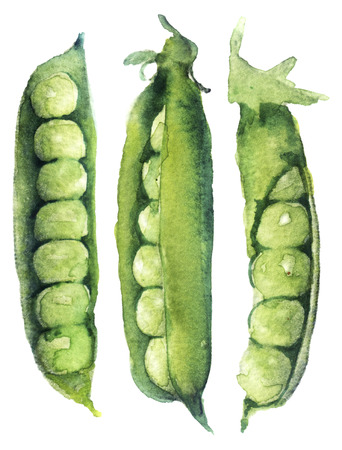watercolor sketch: peas on a white background Stock Photo