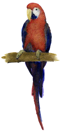 macaw: watercolor sketch of macaw parrot  on a white background
