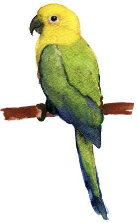 aviary: watercolor sketch of parrot lovebird on a white background