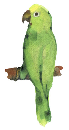 aviary: watercolor sketch of lovebird parrot a white background Stock Photo