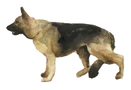 panting: watercolor sketch of shepherd on white background