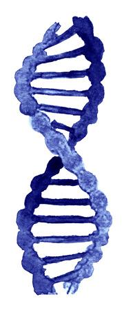 白い背景の DNA の水彩スケッチ 写真素材
