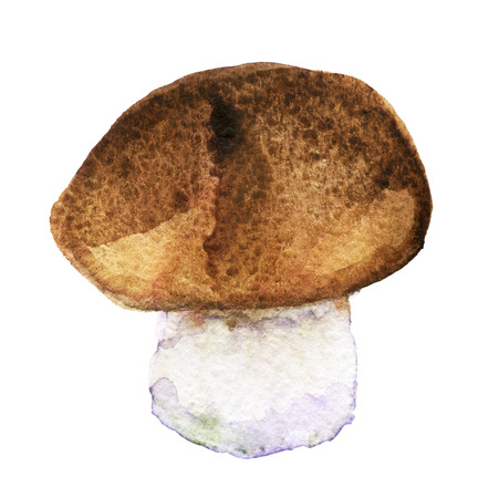 cep: watercolor sketch of bolete. King bolete on white background