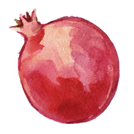 aquarel schets van granaatappel of granaat geïsoleerd op een witte achtergrond Stockfoto