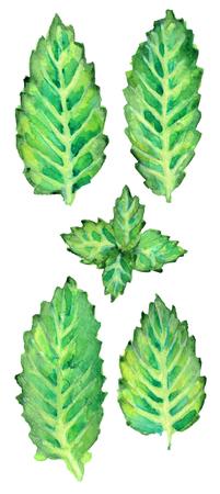 Aquarel schets van mint geïsoleerd op een witte achtergrond Stockfoto