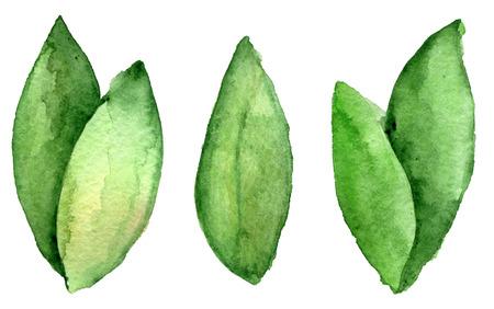 waterverfschets van bladeren op witte achtergrond worden geïsoleerd die