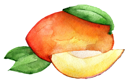 watercolor sketch of mango isolated on white background Stockfoto