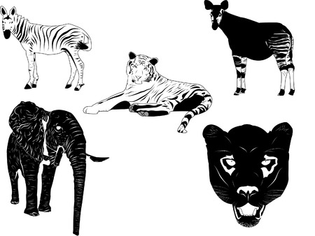 Vector of wild animals. Separate layers for each vector, colors can be applied easily. Stock Vector - 4929017