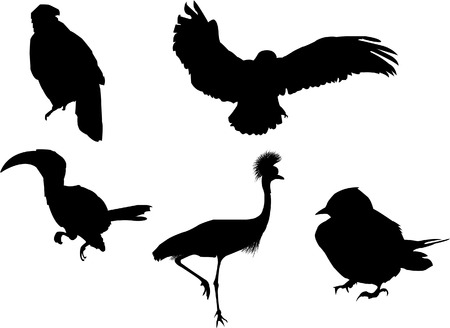 Vector silhouettes of 5 different birds. Easy color modification. Can be resized and placed on any type of design.