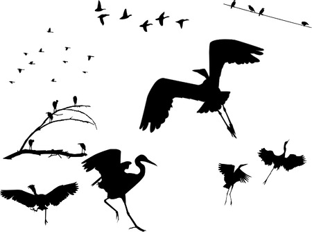 Several flock of birds silhouettes, sitting on a dead tree, on a cable or taking off. Illustration