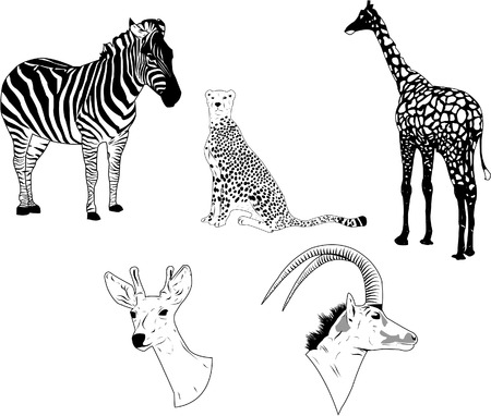 Vector of wild savane animals