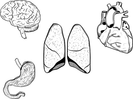 Vector illustration of a brain, heart, stomach and lungs. Each organ on a separated layer in format 8. Illustration
