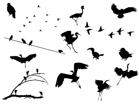Huge set of several birds and flocks silhouettes. Vector in EPS8.