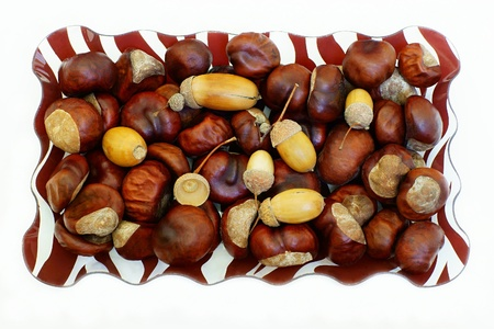 Still life from seeds of chestnuts and acorns in a rectangular dish on a white background photo