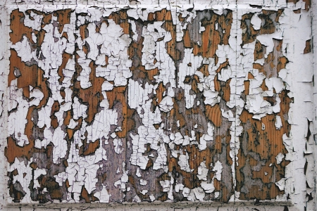 peeledoff: Abstract texture of the peeled-off white paint on a wooden board