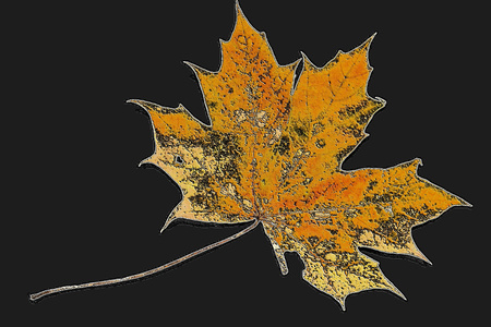 the isolated maple leaf from an artificial stone on a black glossy background