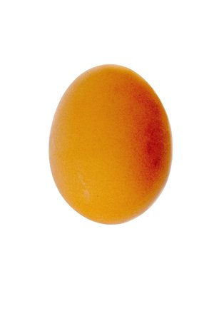 opaque: birds egg of brown color isolated on a white background