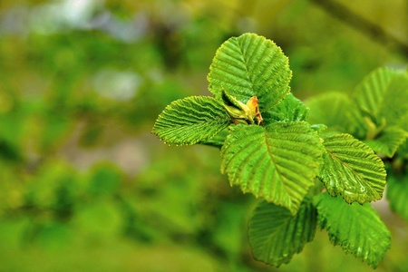 escapes: spring escapes of young green leaves on a new branch of a tree