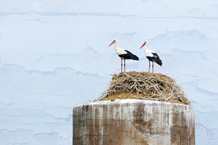 synchronously: two storks stand in a nest from wooden branches on an old rusty iron water tower